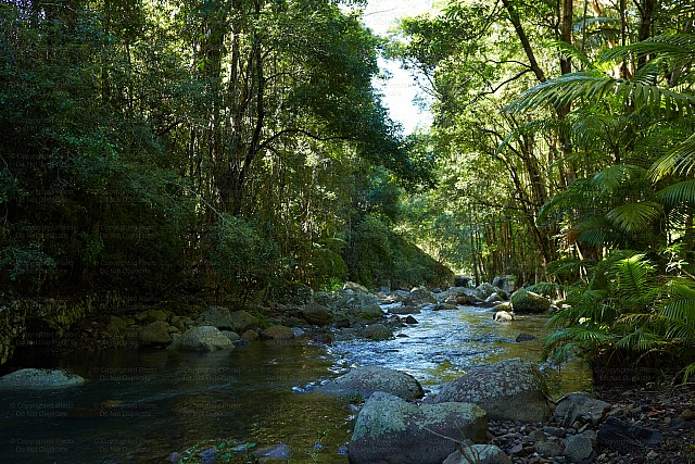 Tweed Valley Creek 1