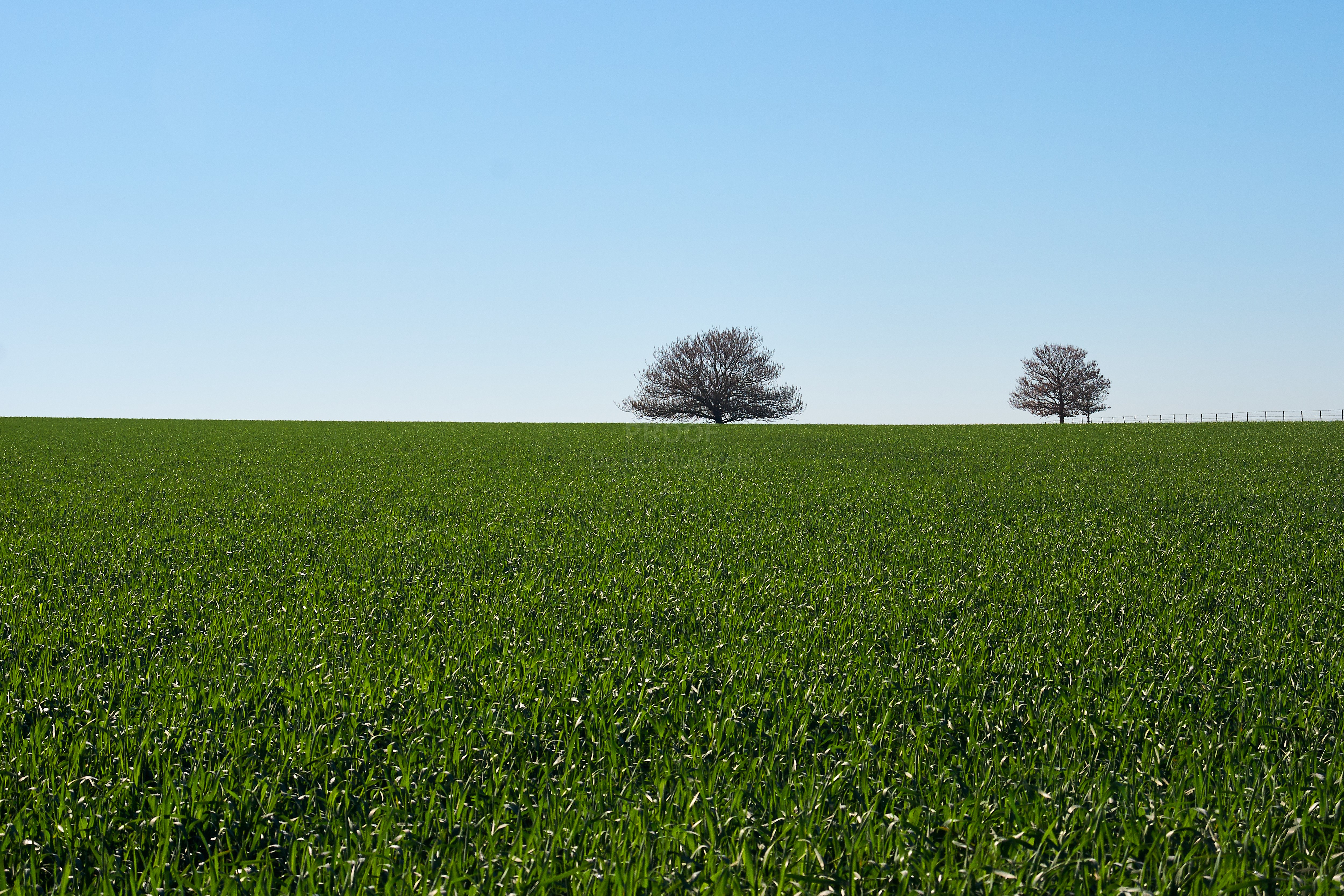 Trees and Field 4844