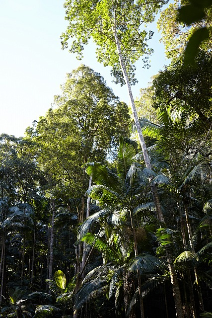 Rainforest_2784