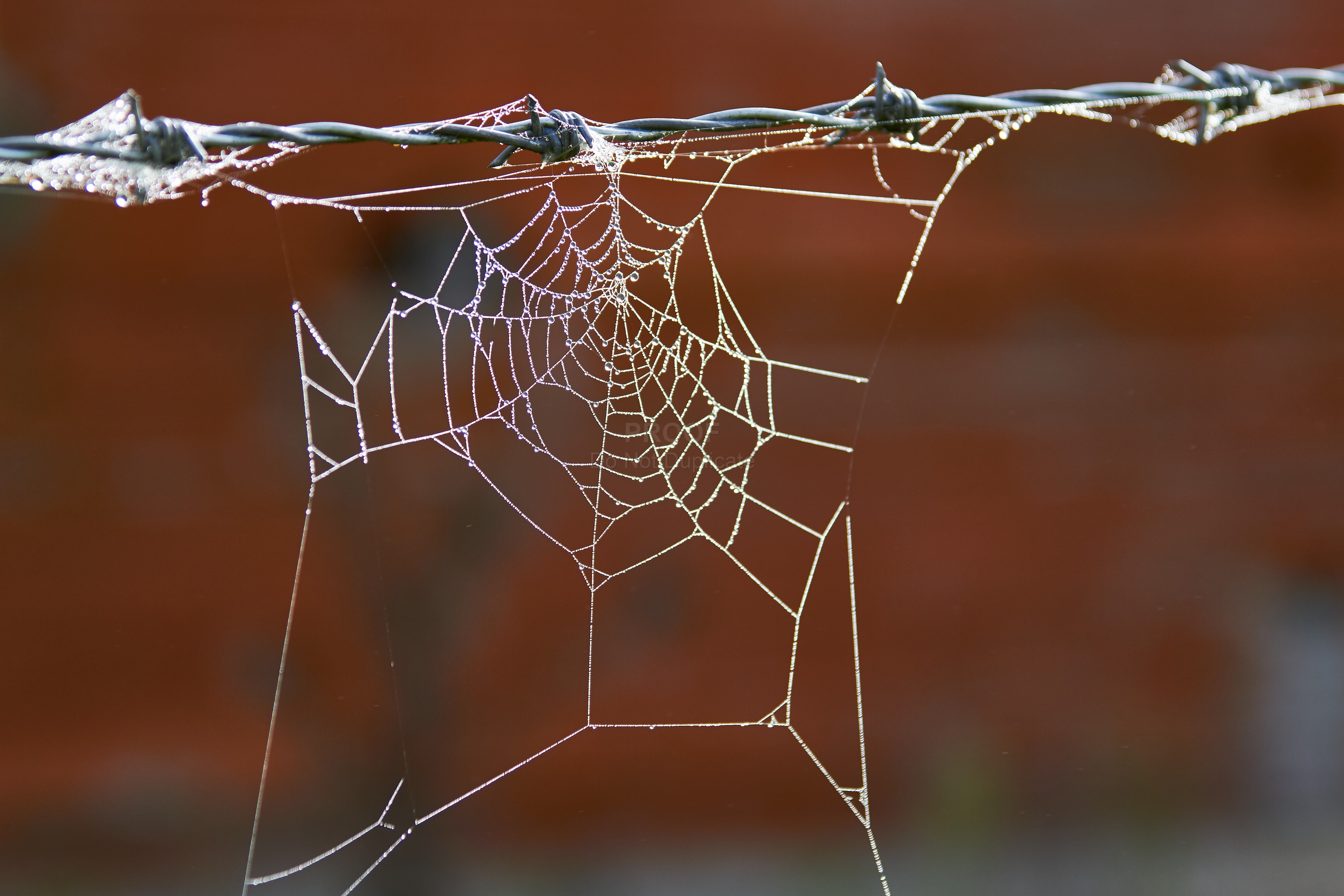 Fence_and_web_5227
