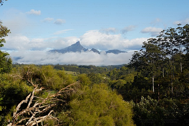 Mount Warning 5619