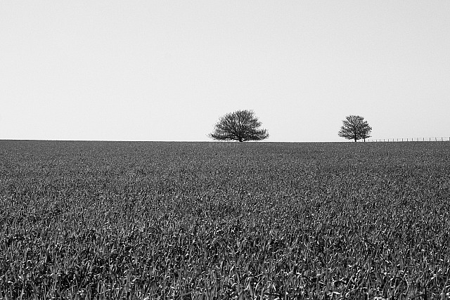 Trees and Field 4844 (black & white)