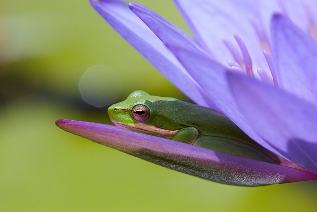 Frog_6143